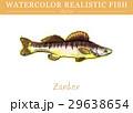 水彩画 透明水彩 サカナのイラスト 29638654