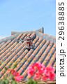 竹富島 シーサー 29638885