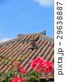 竹富島 シーサー 29638887