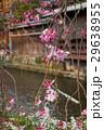 祇園白川の桜(京都市-京都府) 29638955