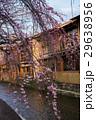 祇園白川の桜(京都市-京都府) 29638956