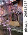 祇園白川の桜(京都市-京都府) 29638957