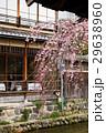 祇園白川の桜(京都市-京都府) 29638960