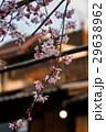 祇園白川の桜(京都市-京都府) 29638962
