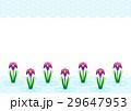 花 菖蒲 青海波のイラスト 29647953