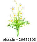 花 誕生花 2月のイラスト 29652303