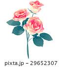 誕生花・6月・バラ 29652307