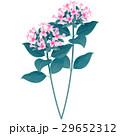 誕生花・11月・ブバルディア 29652312