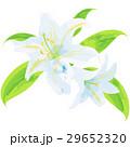 誕生花・7月・ユリ 29652320