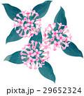 誕生花・11月・ブバルディア 29652324