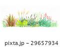 自分だけの庭造り 29657934