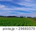 風景 北海道 十勝平野の写真 29660370