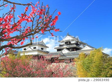 早春の松山城と紅梅 29663490
