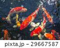 アジア人 アジアン アジア風の写真 29667587