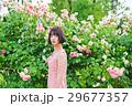 アジア人 ピンク色 若い女性の写真 29677357