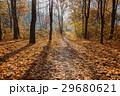 森林 林 森の写真 29680621