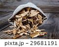 きのこ キノコ 茸の写真 29681191