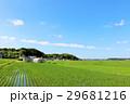 夏の青空 綺麗な田んぼ風景 29681216