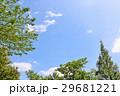 五月晴れの青空 新緑の木々 29681221