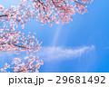 桜イメージ 29681492