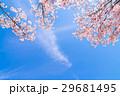 桜イメージ 29681495