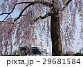 青空と枝垂桜と氷川丸 29681584