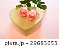 薔薇 バラ科 バラの写真 29683653