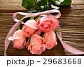 薔薇 バラ科 バラの写真 29683668
