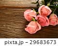 薔薇 バラ科 バラの写真 29683673