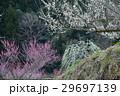 美郷梅林(徳島県吉野川市美郷) 29697139