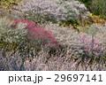 美郷梅林(徳島県吉野川市美郷) 29697141
