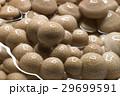 新鮮 きのこ キノコの写真 29699591