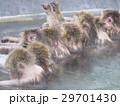 背を向けて並んで湯に浸かるサル 29701430