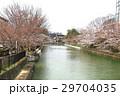京都の桜 29704035