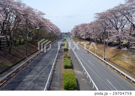 東八道路 桜の季節 29704759