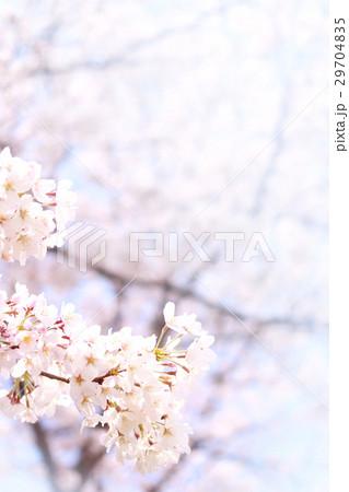 桜 29704835
