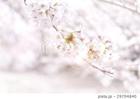 桜 29704840