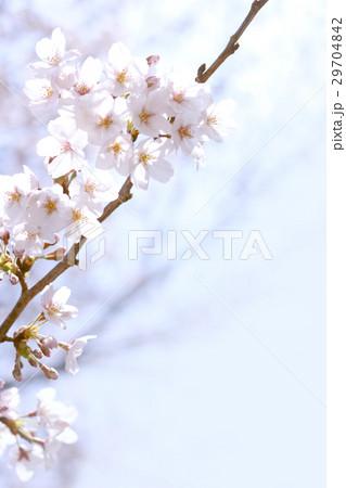 桜 29704842