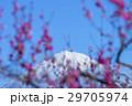 風景 富士山 梅の写真 29705974