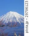 富士山と梅林 29706123