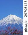 富士山と梅林 29706128