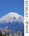 富士山と梅林 29706138