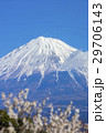 富士山と梅林 29706143