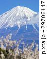 風景 富士山 梅の写真 29706147
