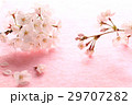 桜・枝2本P 29707282