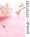 桜・枝2本Pタテ 29707283