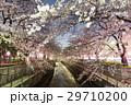 川と桜2 29710200