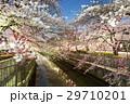 川と桜3 29710201