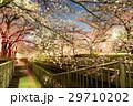 川と桜4 29710202