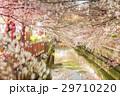 川と桜5 29710220